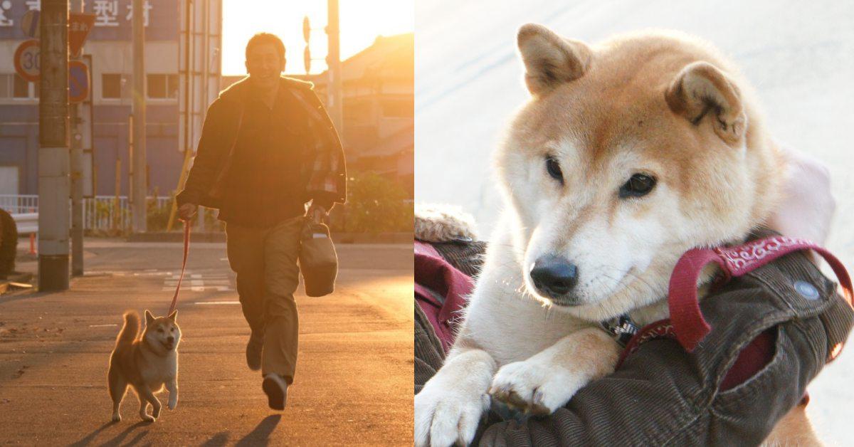 有柴柴就給讚!療癒系動物電影《柴公園》,絕對是柴奴們必看的專犬電影!